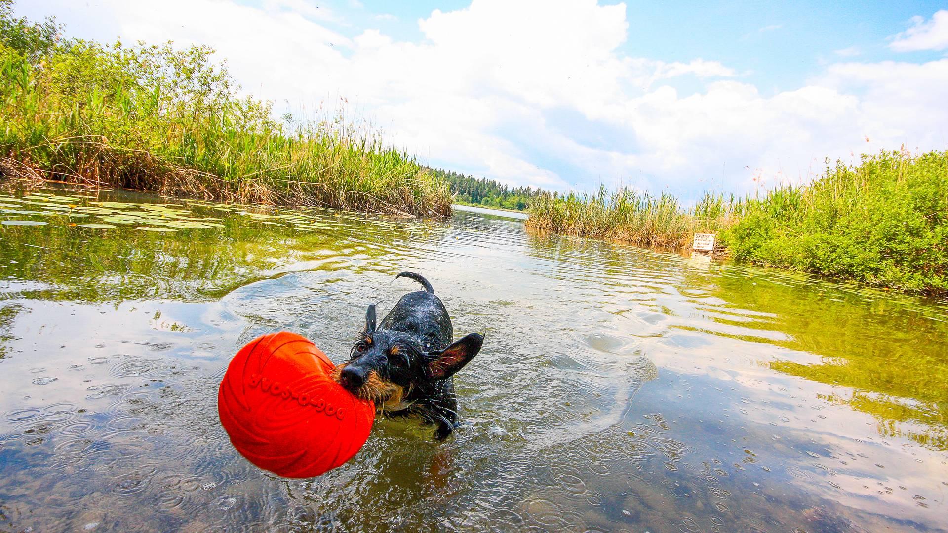 Aktiv-Urlaub mit Hund - Spass im Wasser