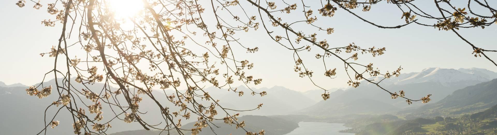 Millstaetter See im Fruehling